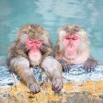 入浴剤はなぜ温まるの?硫酸ナトリウムで体が温まる本当の理由